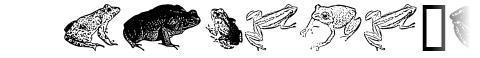 AmphibiPrint