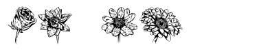 Blumen písmo