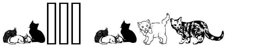 Cats CSP