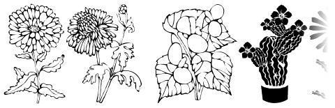 DT Flowers