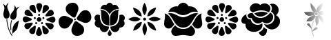 Kalocsai Flowers