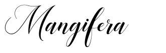 Mangifera font